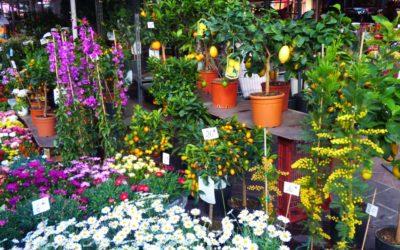 1er mai marché au fleurs